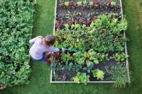 Above View Of Tending Garden