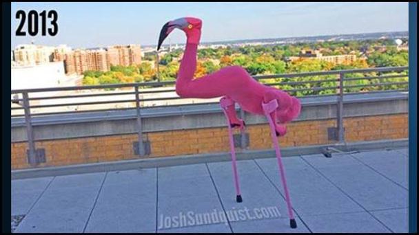 One-legged-flamingo